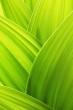 Verde come la Rabbia