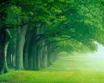 legno verde - primavera - rabbia