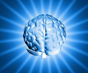Le connessioni cerebrali dipendono dalle esperienze
