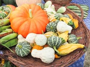 varietà di zucche - foto dal web