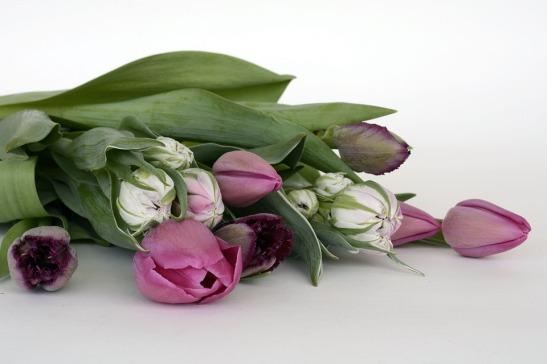 fiore-poesia2